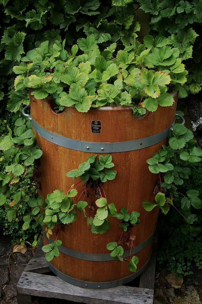Holzpflanzkübel - Pflanzkübel Holz - Erdbeerfass