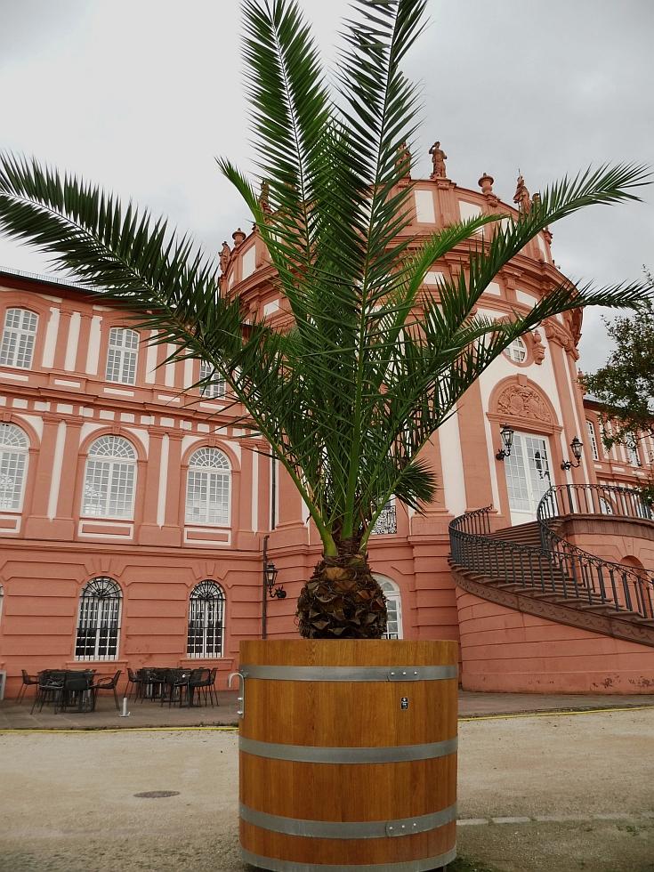 Holzpflanzkübel - Pflanzkübel Holz - Palmenkübel