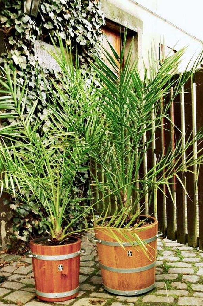 Pflanzkübel Holz - Holzpflanzkübel - bepflanzt